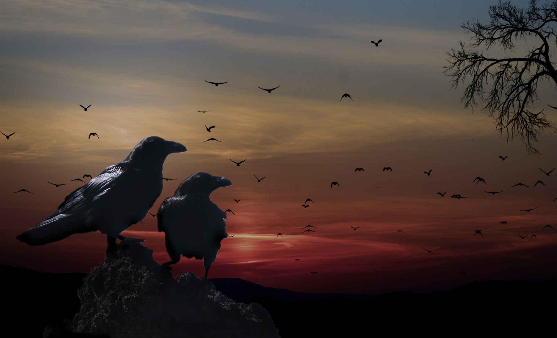 crows-559274_1920